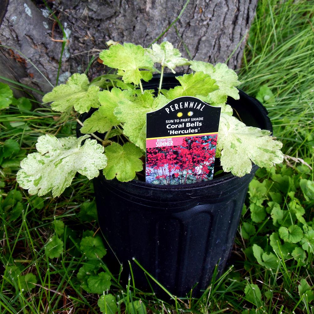 Glen Ellyn Plant Nursery. Roots Backyard Nursery!
