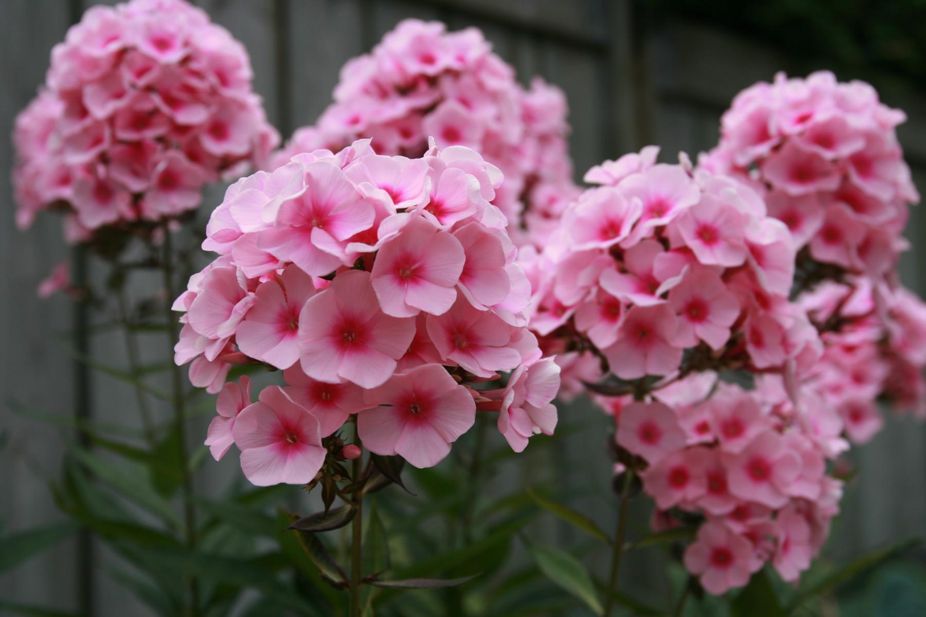 Glen Ellyn Plant Nursery